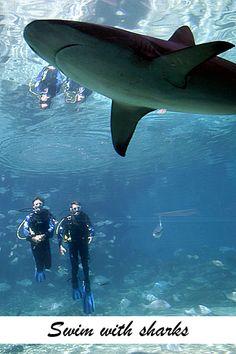Filmmaker Rob Stewart and Sea World's Trevor Long swim with the sharks at Sea World Queensland Australia 2008 - relates to the name Stewart Shark Diving, Sharks, Scuba Diving, Grandeur Of The Seas, Shark Photos, Soul Surfer, Ocean Creatures, Shark Week, Underwater World