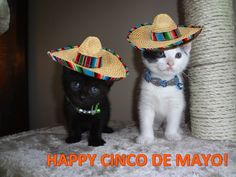 Happy Cinco de Mayo from Dink and Doo!