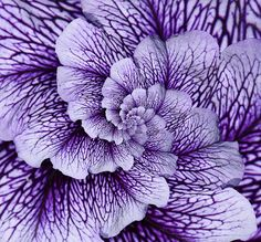 Purple Veins by Bill Brown, via Flickr