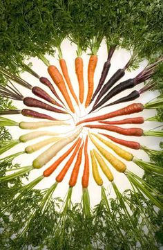 How to grow carrots.