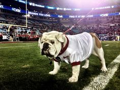 """""""In honor of #NationalPuppyDay, we have to show some love to our favorite #Dawg! We love you Uga!"""""""