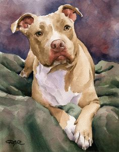 Staffordshire Terrier Art Print By Watercolor Artist Dj Rogers - Staffordshire Terrier Art Print By Watercolor Artist Dj Rogers About The Artwork This Is A Professional Open Edition Staffordshire Terrier Art Print From An Original Watercolor Painting Staf Animal Paintings, Animal Drawings, Art Drawings, Indian Paintings, Drawing Animals, Watercolor Artists, Watercolor Animals, Watercolor Painting, Watercolor Trees