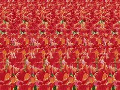 magic eye....tulips