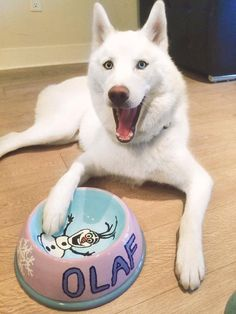 Olaf and the bowl Kirstie decorated for him! Look how happy he is!!