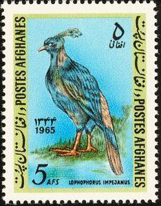 Himalayan Monal (Lophophorus impejanus)