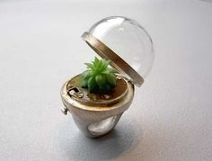 Plant in a ring :)