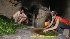 Lịch Sử Phát Triển Của Cây Trà Thái Nguyên