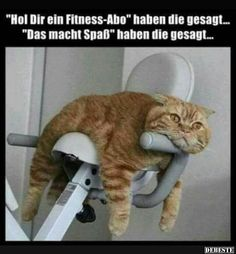 Gyms Equipment How To Use - Gyms Videos Ideas - - Gyms Life Humor - Gyms Clothes Black Funny Animal Pictures, Funny Photos, Cool Pictures, Funny Shit, Funny Cute, Animals And Pets, Funny Animals, Cute Animals, Image Facebook