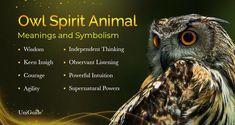 Butterfly Spirit Animal, Spirit Animal Totem, Animal Spirit Guides, Your Spirit Animal, Animal Totems, Owl Symbolism, Spirit Meaning, Native American Animals, Animal Meanings