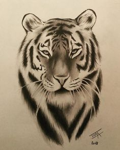 Tiger The Effective Pictures We Offer You About tattoo leg A quality picture can tell you many thing Tiger Sketch, Tiger Drawing, Tattoo Drawings, Art Drawings, Tattoo Ink, Arm Tattoo, Hand Tattoos, Sleeve Tattoos, Animal Sketches