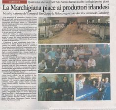 Incoming Irish farmers in Benevento (campania Region ) #Marchigiana