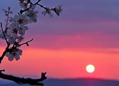 A pink March sunset in Maremma Tuscany Italy with the first flowers of spring