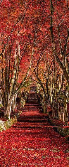 Keisoku-Ji Temple, Shiga, Japan  #by Takahiro Bessho      www.lifeisverybeautiful.tumblr.com