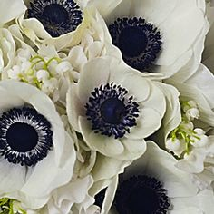 white flowers with navy center | anemones_navy_white_preppy_wedding_auburn_al_wedding_planner_day_of ...