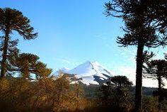 Panoramio - Photo of Volcan Llaima, Parque Nacional Conguillio, Chile