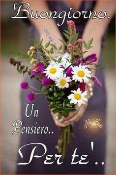 buongiorno un pensiero per te fiori