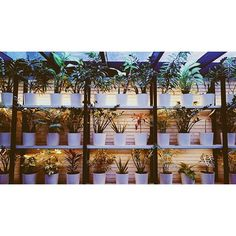 Hotel Praktik Bakery   Instagram Photos by location