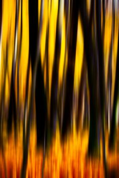 Psychedelic Inferno Forest - Abstract Photography #abstractphotography