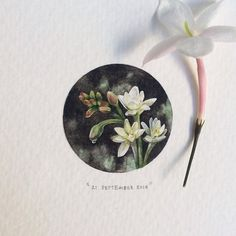Paintings for ants : Lorraine loots  Now is the time to plant bulbs like the March Lily, Tuberose or Berg Lily.