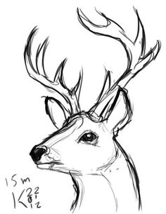 Exciting Learn To Draw Animals Ideas. Exquisite Learn To Draw Animals Ideas. Cool Art Drawings, Pencil Art Drawings, Drawing Sketches, Easy Animal Drawings, Deer Drawing Easy, Simple Animal Drawings, Drawing Ideas, Simple Sketches, Drawing Animals