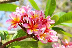 6/7(水)バリ島ウブドのお天気は晴れ。室内温度28.9℃、湿度65%。久しぶりに良い天気ー!今日は曇りってこないかな?素敵なサンセットが見れそうな予感??