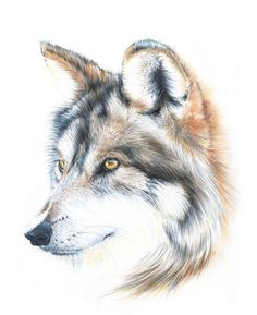 wolf drawing  wolf illustration  animal art  by NayanaIliffe - pencil and pan pastels