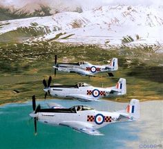 A formation of Royal New Zealand P-51D Mustangs. Royal Australian Navy, Royal Australian Air Force, Australian Defence Force, P51 Mustang, New Zealand, Fighter Jets, Aviation, Aircraft, Mustangs