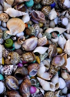 """All the beautiful . - beauty-belleza-beaute-schoenheit: """"via Imgfave for iPhone """" - Sea Shells Image, Shells And Sand, Shell Beach, Am Meer, Shell Art, Sea And Ocean, Shell Crafts, Ocean Life, Rocks And Minerals"""