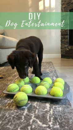 Puppy DIY DIY- Dog treats under the tennis ball. Dog puzzle to entertain your puppy. Training Your Puppy, Dog Training Tips, Training Pads, Zoro, Dog Puzzles, Dog Treat Puzzles, Dog Minding, Diy Dog Toys, Puppy House