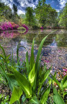 ✮ Spring at Magnolia Plantation - Charleston SC