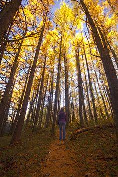 Highland Forest, Fabius, NY