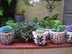 Suculentas. Cool Plants, Cactus Plants, P Garden, Succulent Bouquet, Ceramic Flowers, Painted Pots, Pottery Painting, Green Life, Ikebana