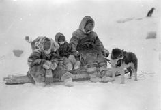 Journal of the Inuit Sled Dog International