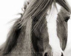 Horse Photography black and white horse by stephaniemoon on Etsy
