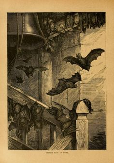 Cassell's Natural History, P. Martin Duncan, Vol 1-2, 1896.