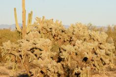 You don't want to fall off your horse on one of these bad boys!  Sonoran Desert.