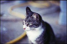 Senza titolo, via Flickr.