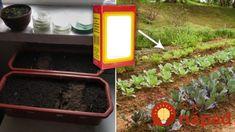 Také zázraky dokáže lacná sóda v záhrade: Nasypte na pôdu a zmiznú slizniaky, dajte ju k muškátom a budú prekrásne! Ale, Gardening, Youtube, Vegetable Garden, Alcohol, Ale Beer, Lawn And Garden, Youtubers, Youtube Movies