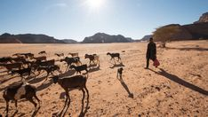 A young boy herds his goats in the Ghat District of Libya, which has been converted largely to desert in the last 100 years. Climate Warming, Public Health, Global Warming, New Mexico, Climate Change, Landscape Design, The Past, Wildlife, Environment