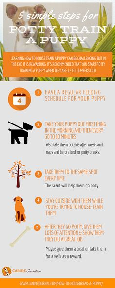 How to Potty Train a Puppy: