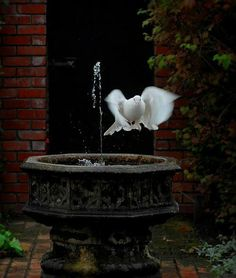 SEASONAL – SPRING – a white dove in italy lands at a fountain for a rink of fresh water, photo via mantza. Beautiful Birds, Beautiful World, Pretty Birds, Beautiful Images, Beautiful Things, Bird Fountain, White Doves, Belle Photo, Water Features