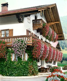 Tyrolean Hanging Geraniums in Red and Pink | Plants from Bakker Spalding Garden Company
