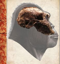 Paranthropus boisei, Digital Reconstructions of Hominids from the set 'Descendenteí,' Human Kind Lineage Project by Eduard Olaru