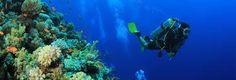 Bilderesultat for Hustadvika diving Scuba Diving, Norway, Aquarium, Environment, Art, Diving, Goldfish Bowl, Art Background, Aquarium Fish Tank