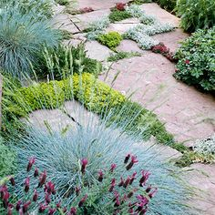 Soften the Edges        Ground-hugging plants soften the sharp edges of the stone pavers in this garden. Chartreuse-colored thyme between the stones contrasts with the blues of fescue and lavender spilling from the edge of the walkways.