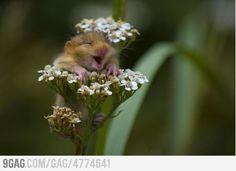 Awww yeah flowers!