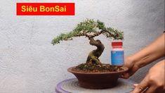 Top 15 tác phẩm Siêu Bonsai mini đầy tinh tế của nghệ nhân Việt Nam Top 15, Bonsai Art, Minis, Plants, Plant, Planets