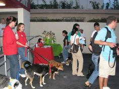 Pet Party Place at Doggie Bag Cafe - YouTube Doggie Bag, Party Places, Animal Party, Birthday Parties, Pets, Youtube, Animals, Anniversary Parties, Animales
