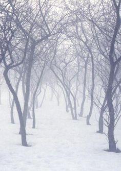 forêt,snow
