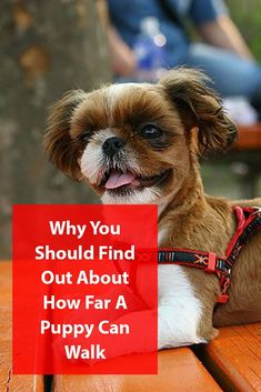 Learn how to gradually introduce your puppy to daily exercise. Puppy Supplies, Crate Training, New Puppy, Dog Care, Dog Mom, How To Introduce Yourself, Cute Dogs, Life Is Good, Your Dog